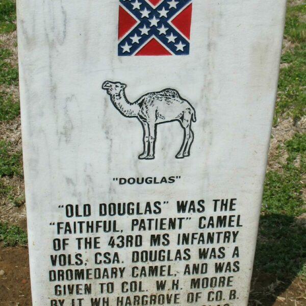 Old Douglas The Camel