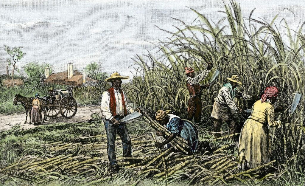 The Breakdown of the Plantation System